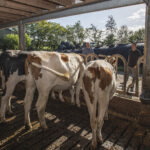 Caring Farmer Hoeve Ackerdijk @Gabriela Hengeveld_6