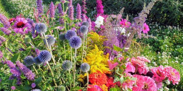 Tinteltuin-Jeanne-biologische-bloemen-750x350